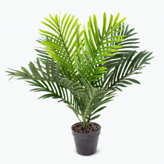 Flora palmu
