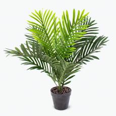 Flora palm H: 60 cm