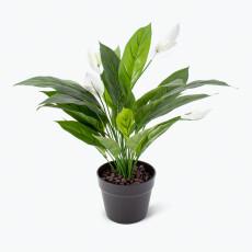 Flora viirivehka