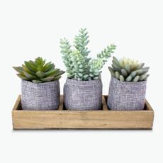 Flora mehikasvi, 3 kpl puutarjottimella