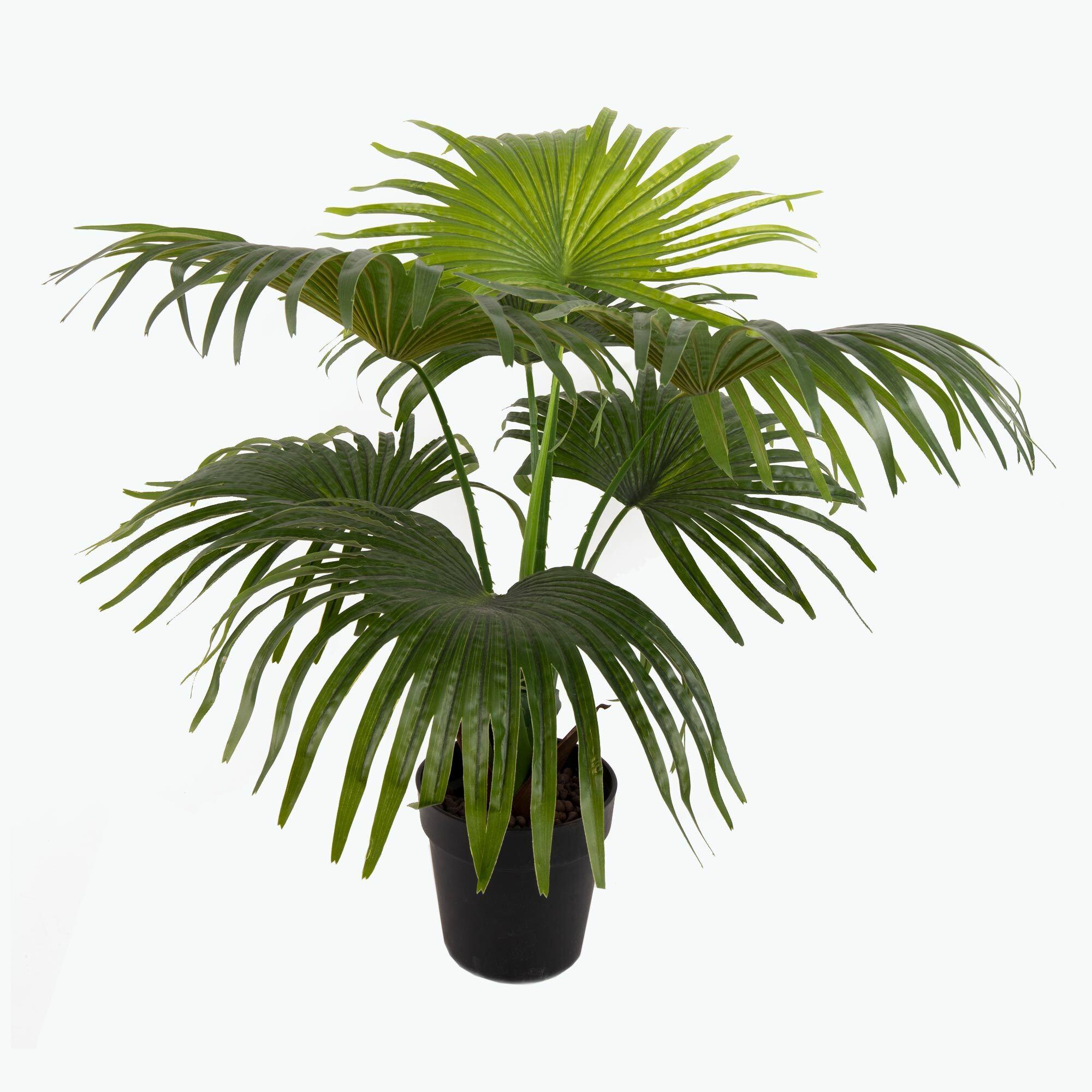 Flora Solfjäderspalm 80 cm