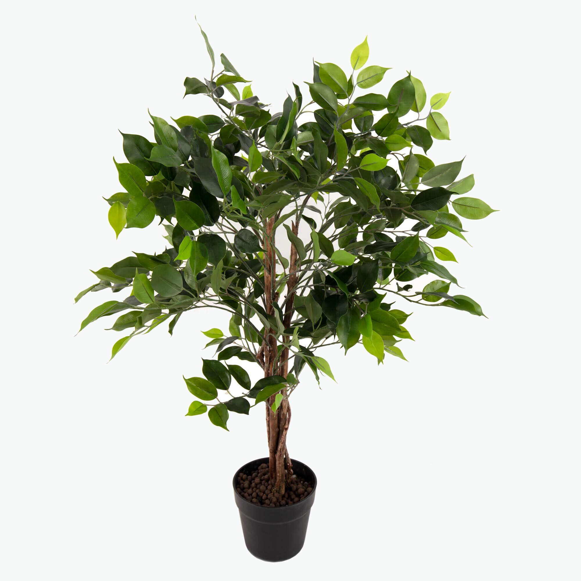 Flora Benjaminfikus 90 cm