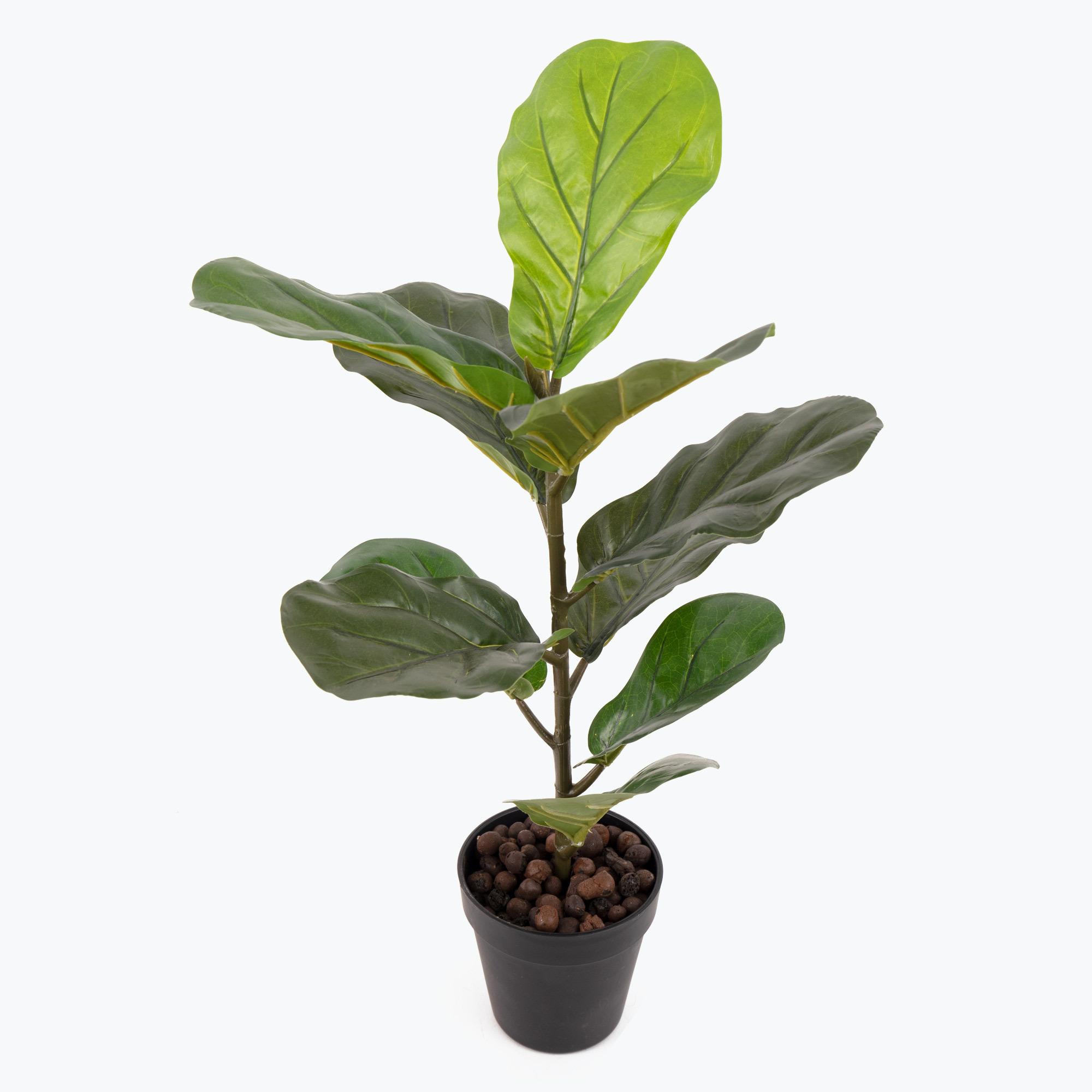 Flora Fiolfikus 50 cm