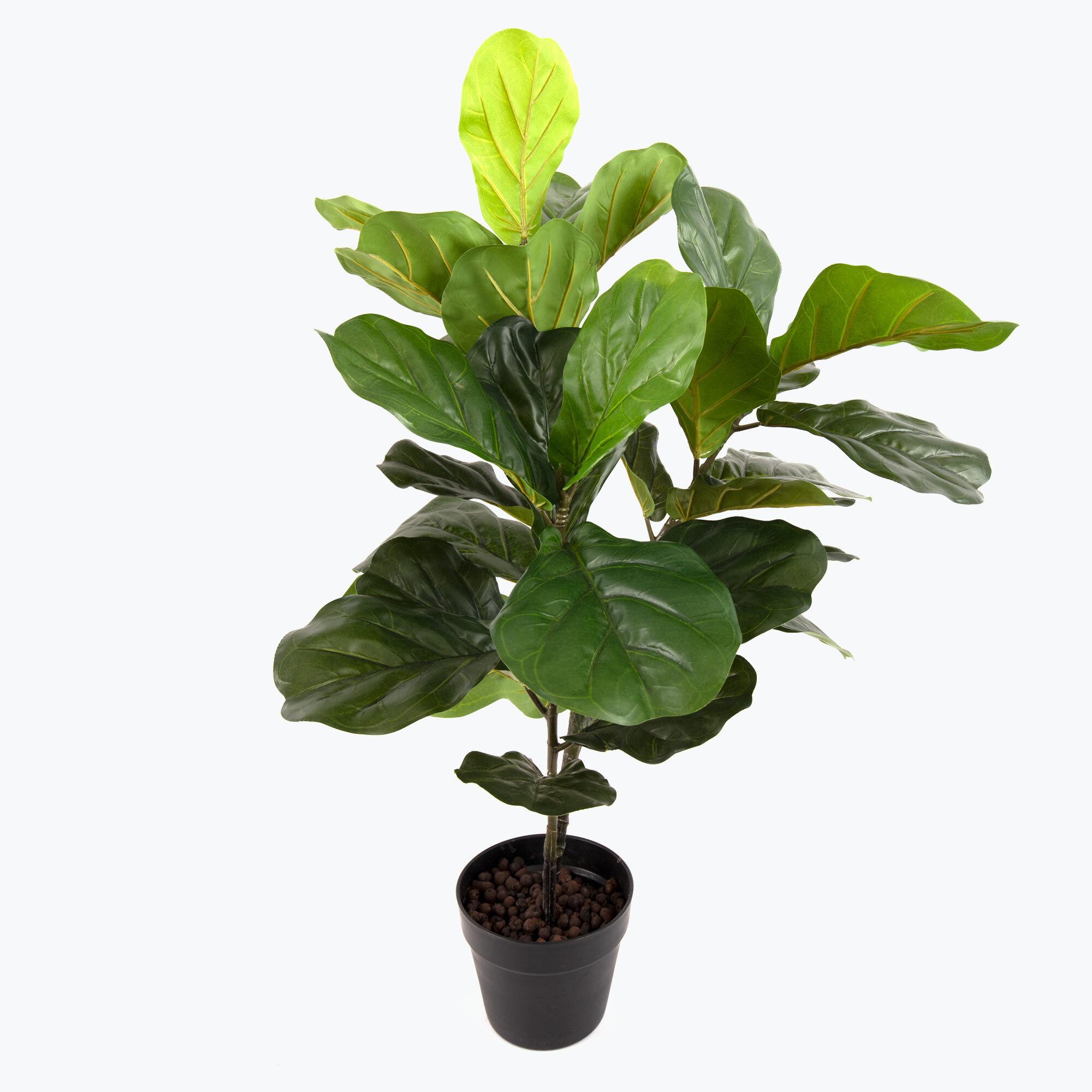 Flora Fiolfikus 100 cm
