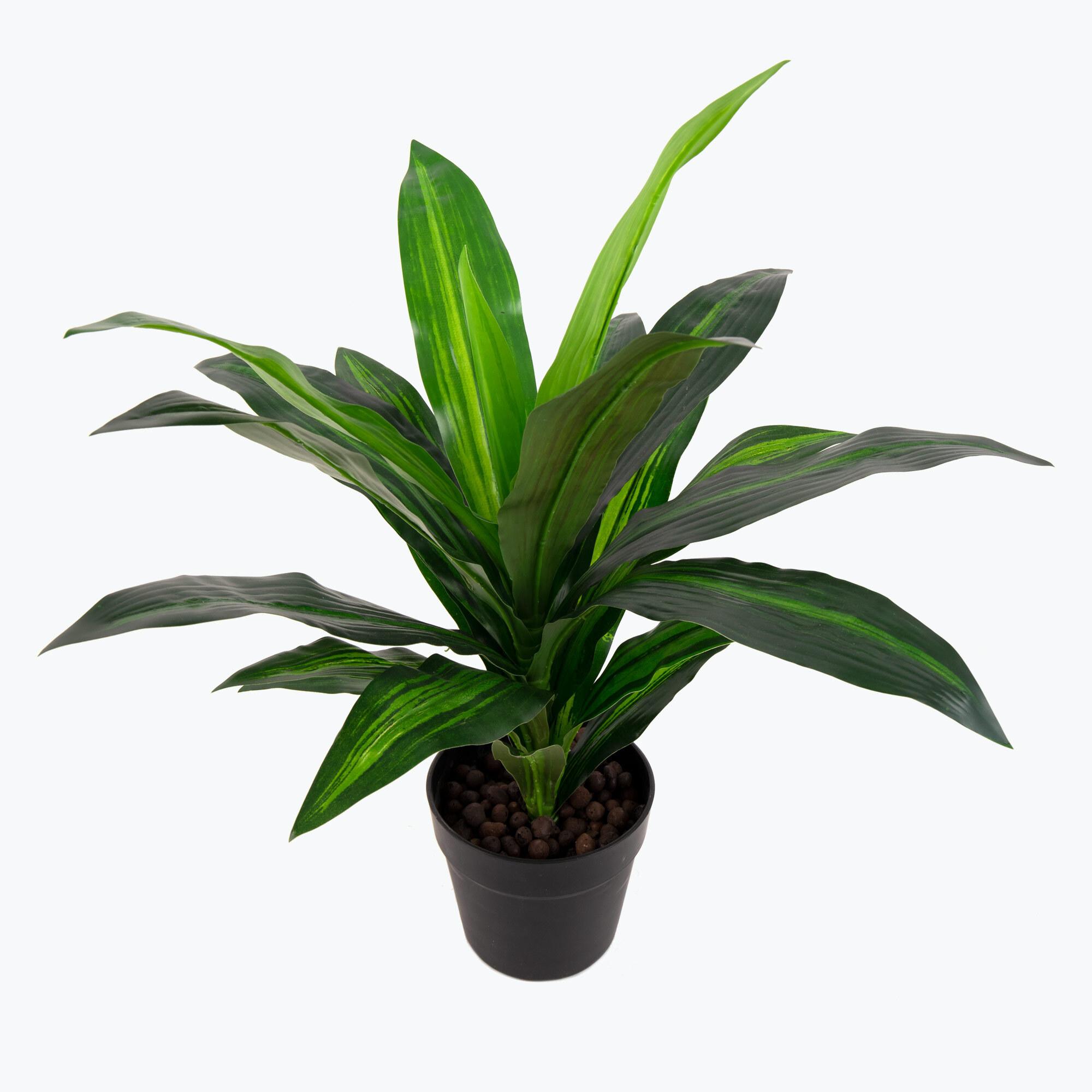 Flora Dracena 65 cm
