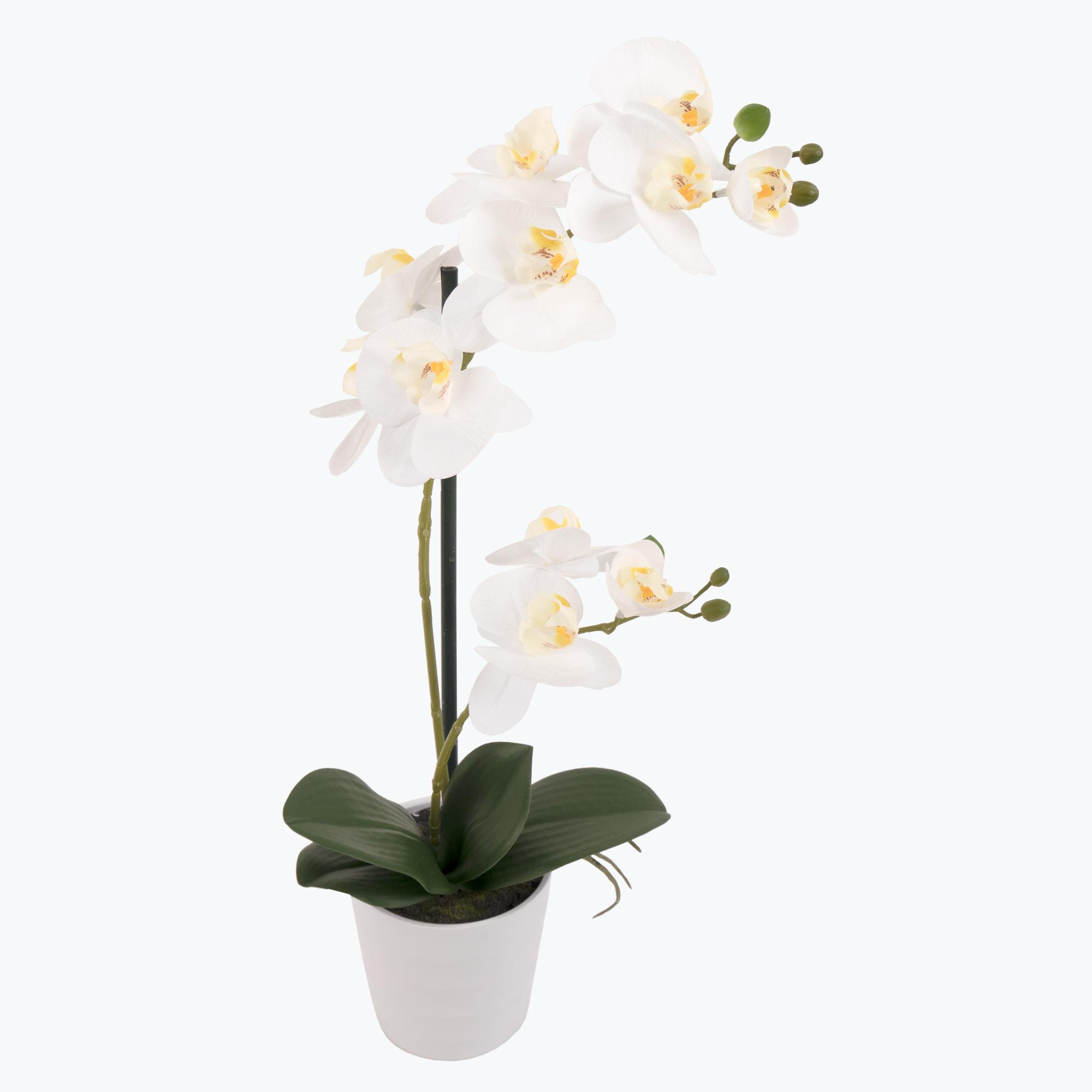 Flora Orkidé 51 cm